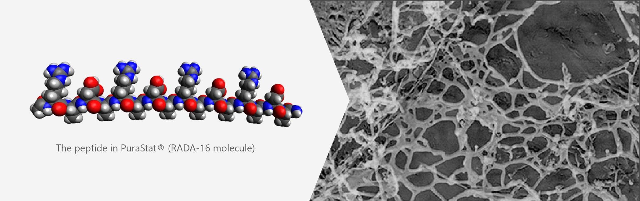 the peptide in PuraStat